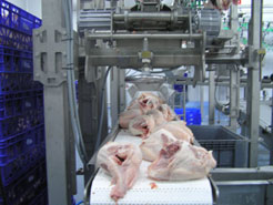 Exit of chicken carcass